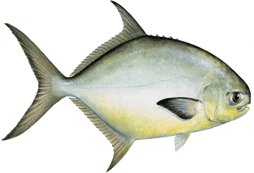 Florida Pompano Fishing Chart